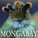 MONGABAY-logo-300