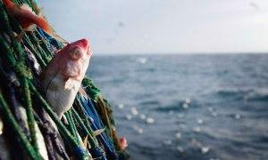 fishing-discard-eu-haddoc-007