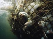 Overfishing01